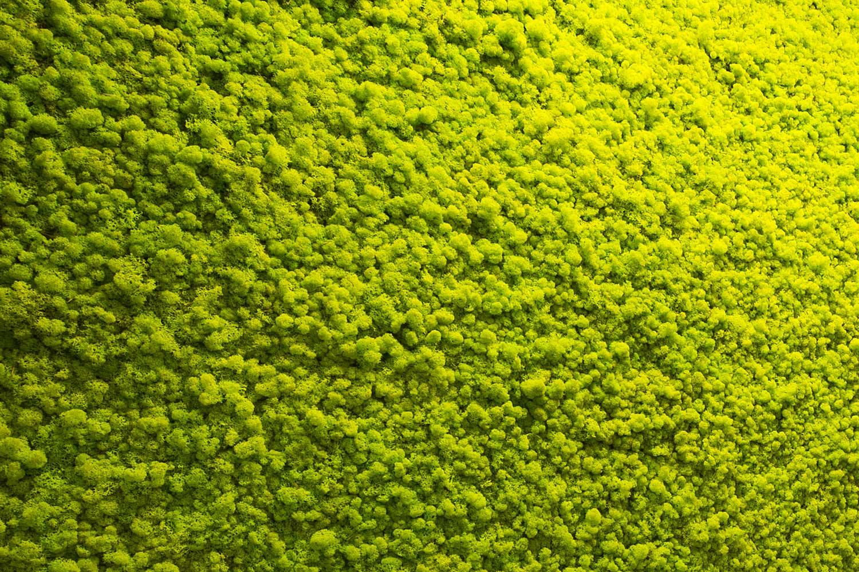 Applicazione muschio sulle pareti interne di casa for Arredatori di giardini