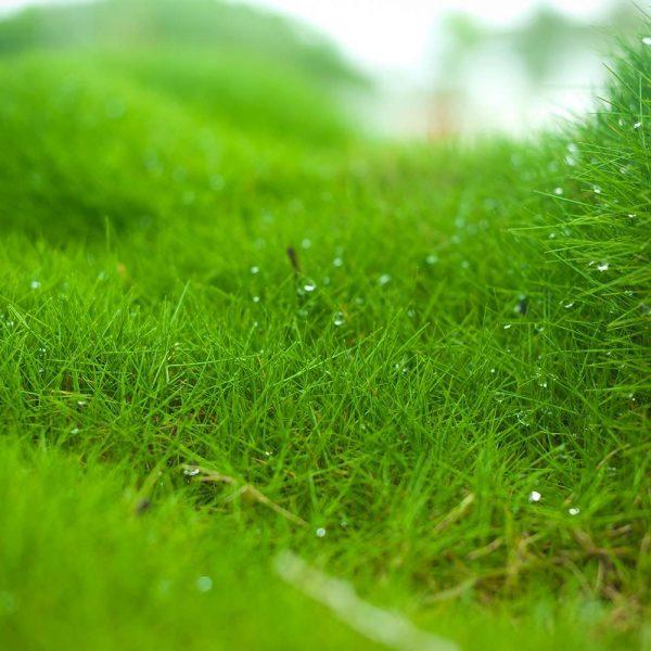 Lizzeri Green Passion - Moss & Interior Design